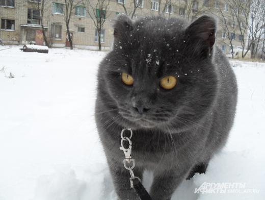 Картинки мишек и котов